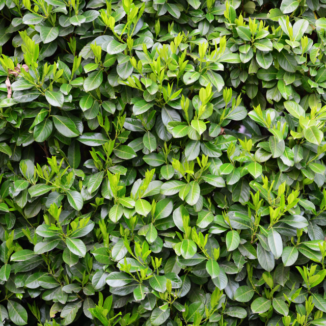 """Green Laurels pattern"" stock image"