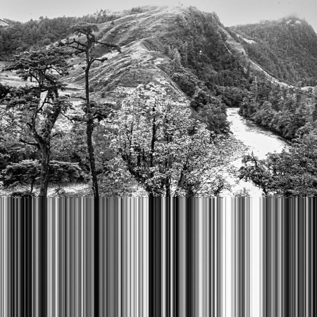 """Bar coding nature"" stock image"