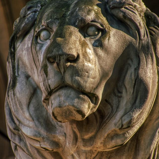 """Stone Lion Closeup"" stock image"