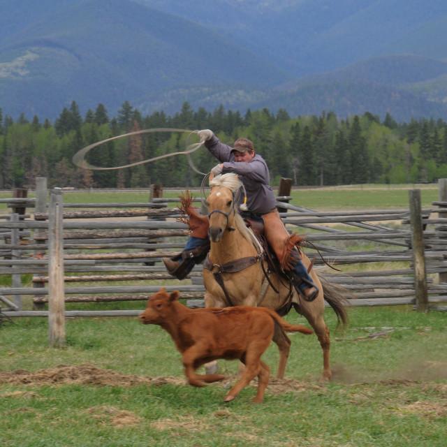 """Montana cowboy"" stock image"