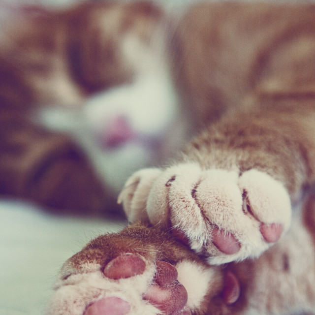 """Cat Paws"" stock image"