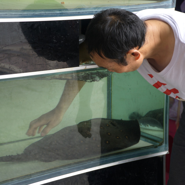 """China aquarium help scratching ray-fish"" stock image"