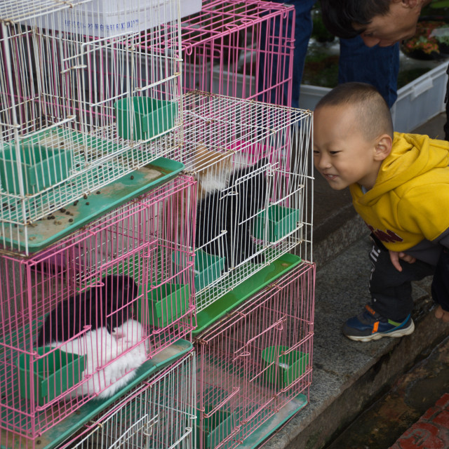 """Chinese kid at animal market"" stock image"