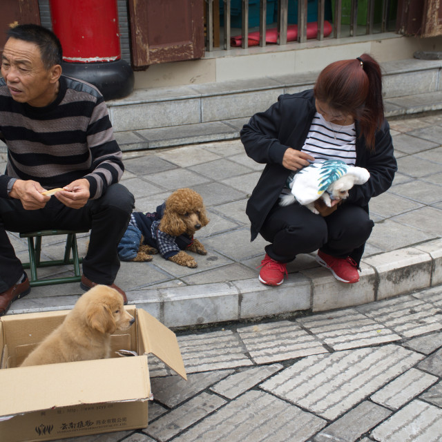 """Dog sellers in China"" stock image"
