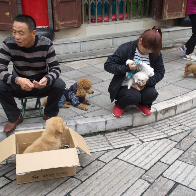 """Selling puppies at street corner"" stock image"