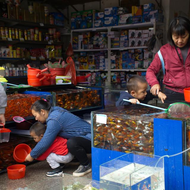 """Chinese ornamental fish seller"" stock image"