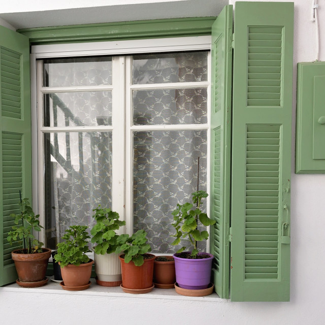 """Shutters and plants"" stock image"