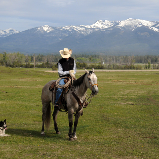 """""""Cowboy and cattle dog"""" stock image"""