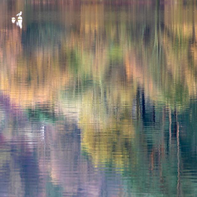 """""""reflection"""" stock image"""