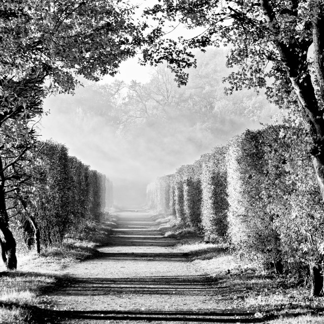"""""""The path"""" stock image"""
