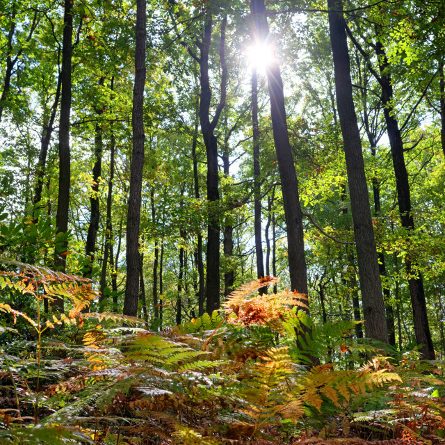 """""""Ferns and sunlight"""" stock image"""