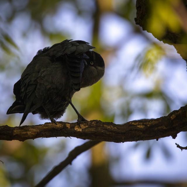 """Bird life"" stock image"