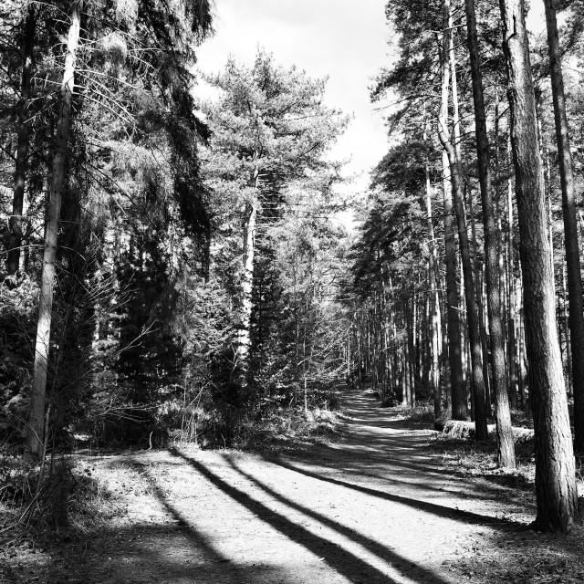 """Pathway Through The Trees"" stock image"