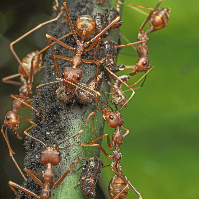 """""""Ants & Aphids 03"""" stock image"""