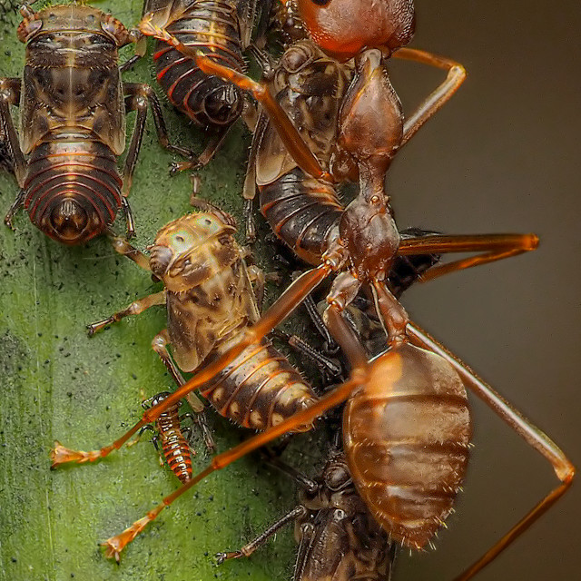"""""""Ants & Aphids 01"""" stock image"""