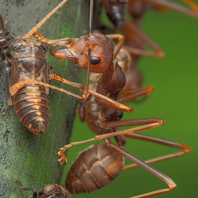 """""""Ants & Aphids 02"""" stock image"""