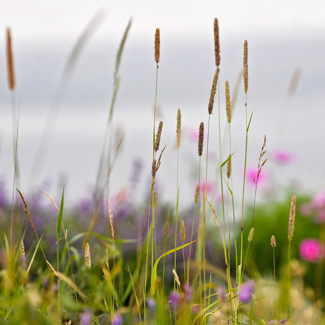 """""""The View through the grasses"""" stock image"""