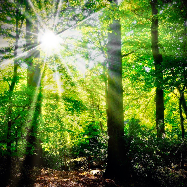 """Sunburst Through Green Trees"" stock image"
