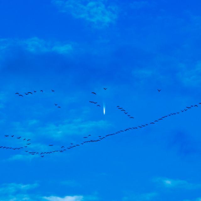 """Migratory birds"" stock image"