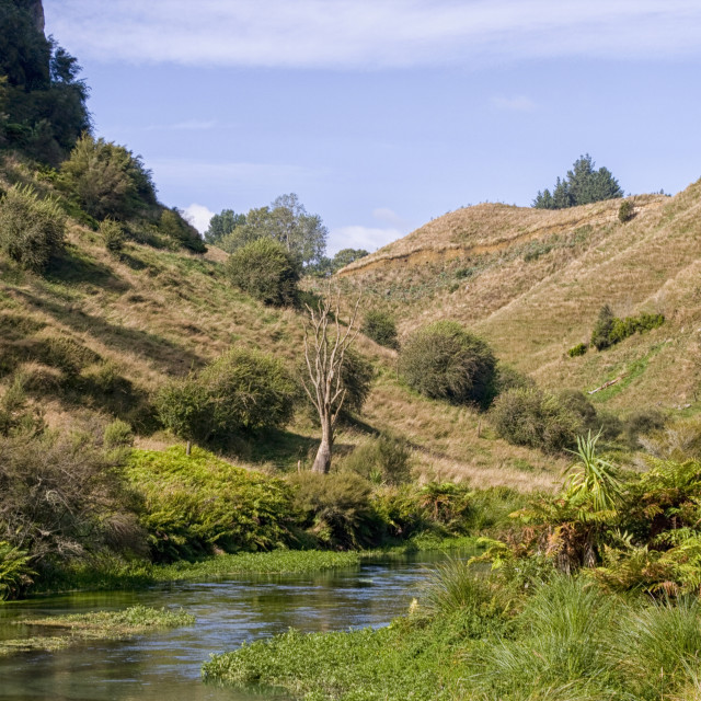 """""""Green pastures in New Zealand"""" stock image"""