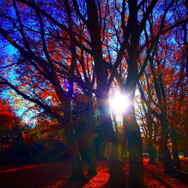 """""""Autumn Sun Between Trees"""" stock image"""