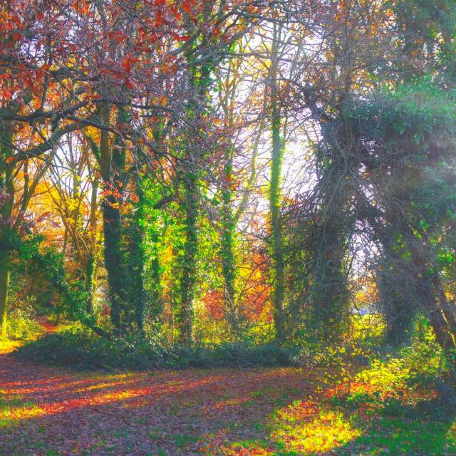 """Autumn Trees At Halliford Park, Surrey"" stock image"