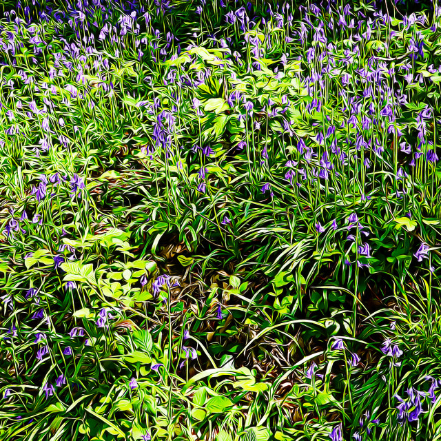 """Bluebells in Springtime"" stock image"