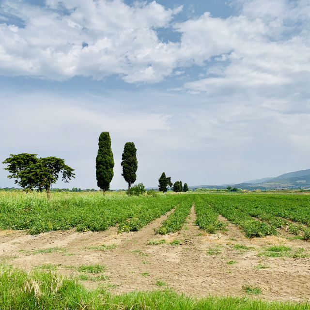 """Tuscany fields"" stock image"