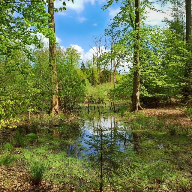 """Kaltenhofer Moor in Schleswig-Holstein in Germany"" stock image"