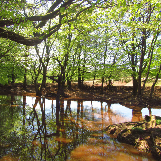 """Watering hole in the Quantocks"" stock image"