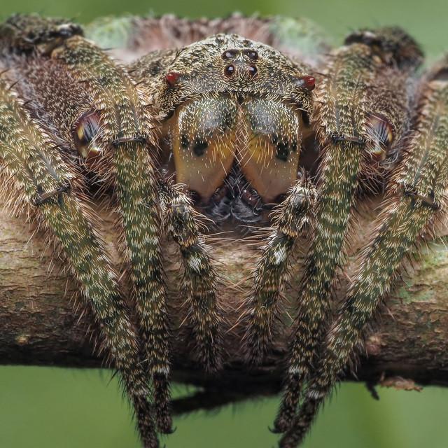 """Wrap-around Spider 02"" stock image"
