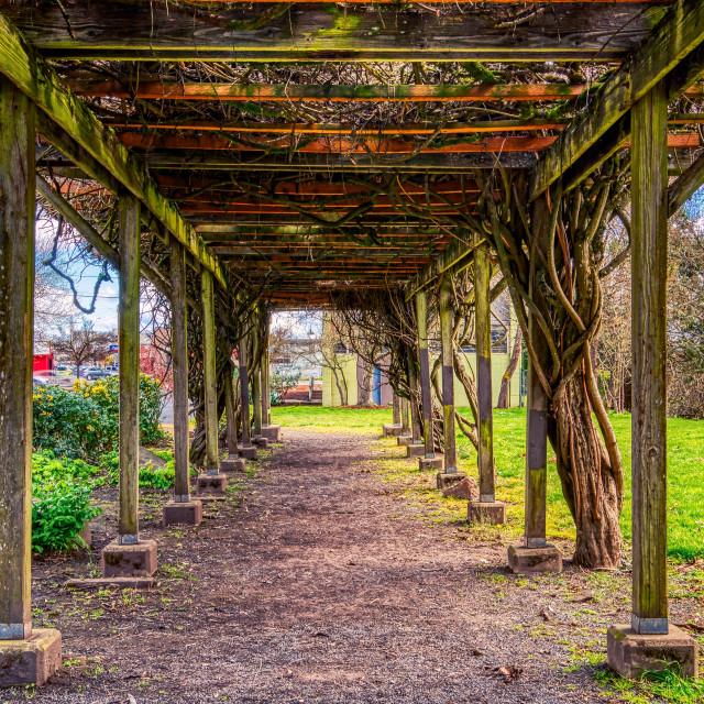 """Canopy, Springfield, Oregon, Old Train Station"" stock image"