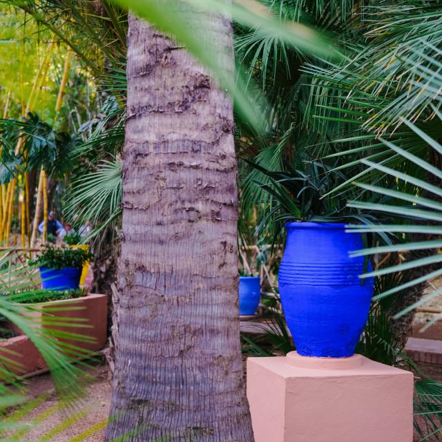 """Jardin Majorelle"" stock image"