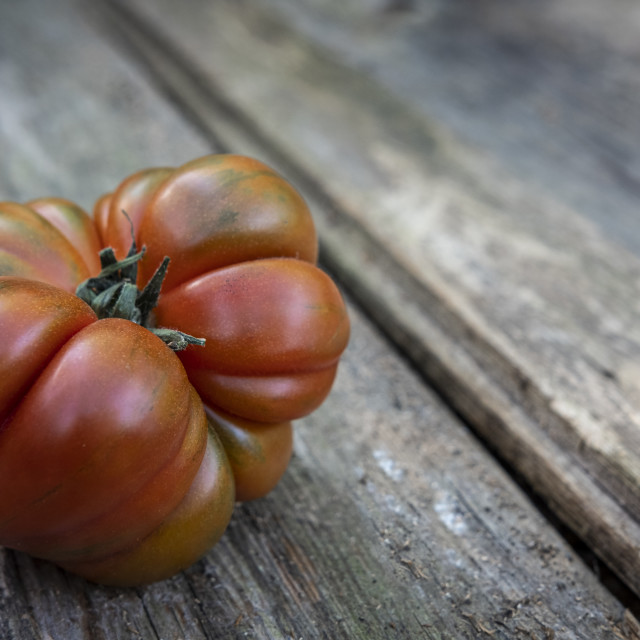 """An organically harvested red tomato from an urban garden on a ru"" stock image"