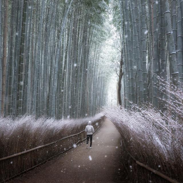 """Arashiyama Bamboo Grove"" stock image"