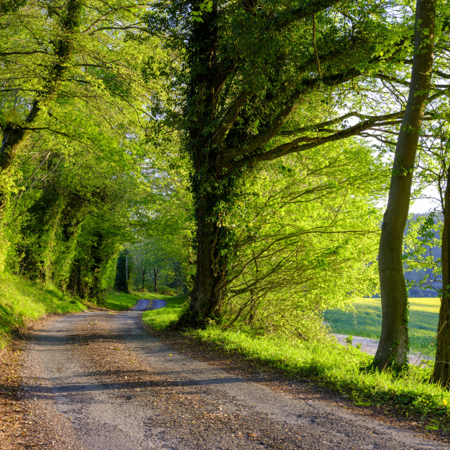 """Country lane in spring in the rolling South Downs near West Mard"" stock image"