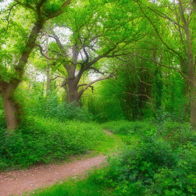 """Lush Greenery : Leafy Glade"" stock image"