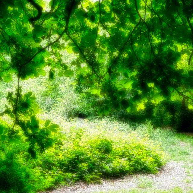 """Lush Greenery : Leafy Foliage"" stock image"