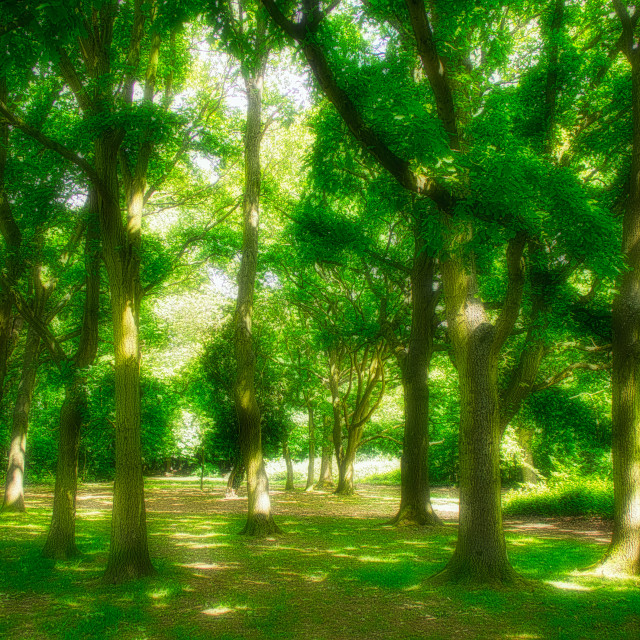"""Lush Greenery : Dappled Light"" stock image"