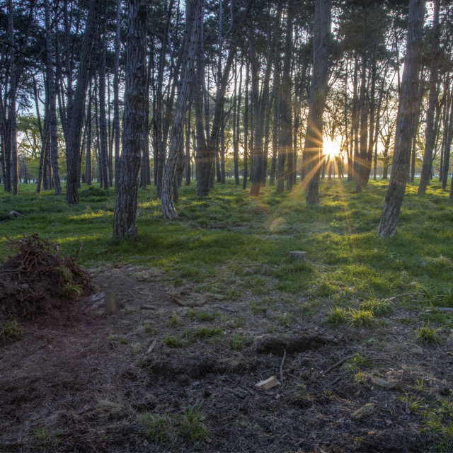 """""""Forest Light"""" stock image"""