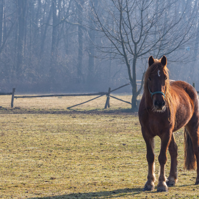 """""""lonely brown horse in the paddock of a farm"""" stock image"""