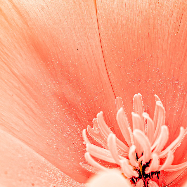 """Flower Pollenating."" stock image"