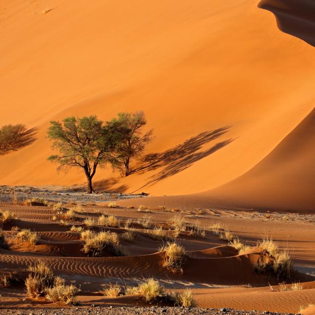 """Sand dune and trees - Namib desert"" stock image"