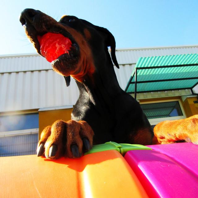 """""""Dog Boarding Life 8"""" stock image"""