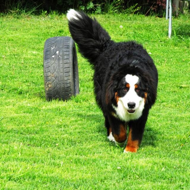 """""""Dog Boarding Life 19"""" stock image"""