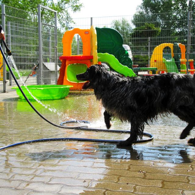 """""""Dog Boarding Life 23"""" stock image"""