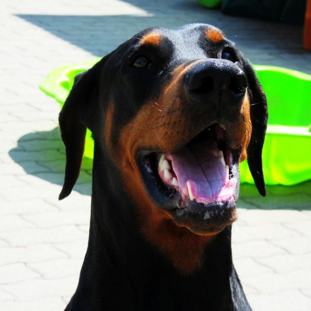 """""""Dog Boarding Life 24"""" stock image"""
