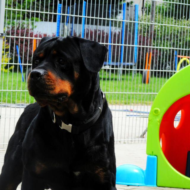 """""""Dog Boarding Life 28"""" stock image"""