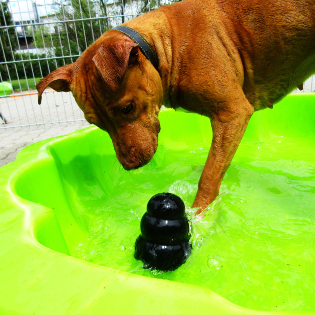 """""""Dog Boarding Life 33"""" stock image"""