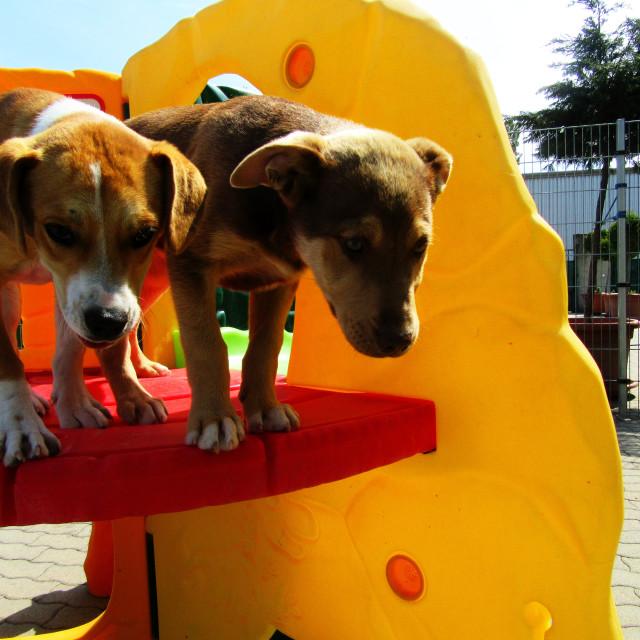 """""""Dog Boarding Life 36"""" stock image"""